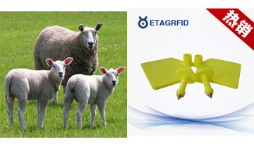 放养型牲畜(羊群)RFID计数管理系统方便农户
